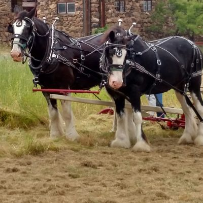 36th Annual Plowing Play Day